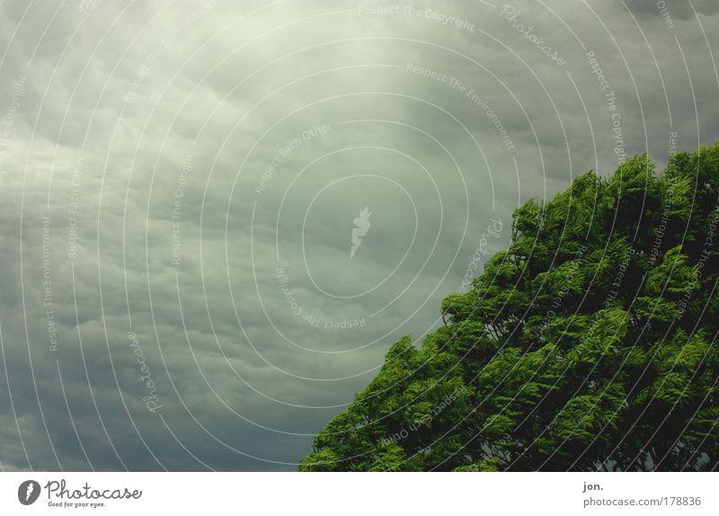 Sturm Farbfoto Außenaufnahme Menschenleer Textfreiraum links Tag Vorderansicht Umwelt Natur Landschaft Pflanze Urelemente Luft Himmel Wolken Gewitterwolken