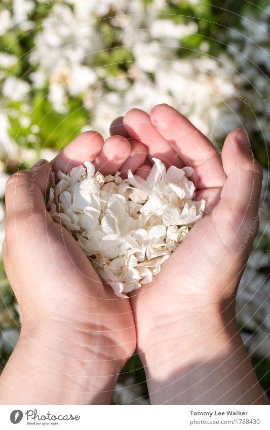 Liebe in den Händen Freude schön Zufriedenheit Garten Valentinstag Freundschaft Hand Finger Natur Blume Gras Park Herz tragen authentisch Freundlichkeit