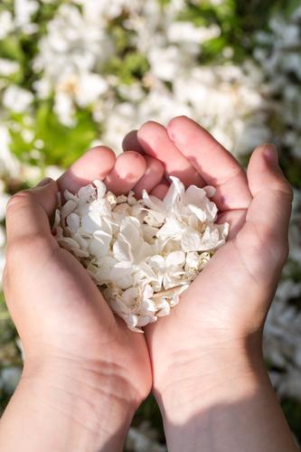 Natur grün schön weiß Blume Hand Freude Liebe Gefühle natürlich Gras klein Garten Zusammensein Freundschaft Park