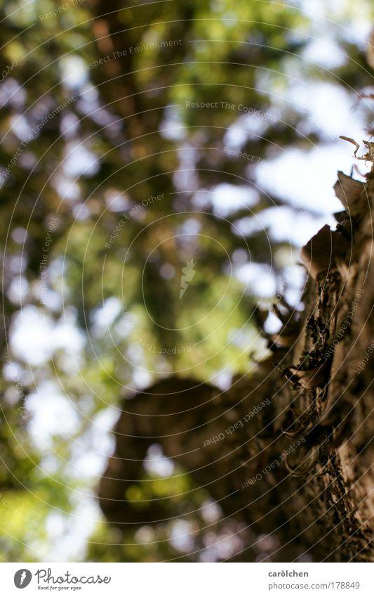 Waldgeflüster Farbfoto Außenaufnahme Strukturen & Formen Menschenleer Tag Unschärfe Schwache Tiefenschärfe Froschperspektive Umwelt Natur Landschaft Tier Sommer