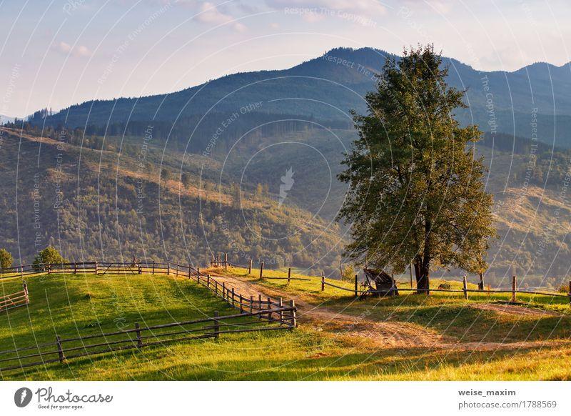 Ländliche Szene Septembers in den Karpatenbergen. Natur Farbe Sommer grün Baum Landschaft Wald Berge u. Gebirge Umwelt Straße Wiese Herbst natürlich Gras Erde