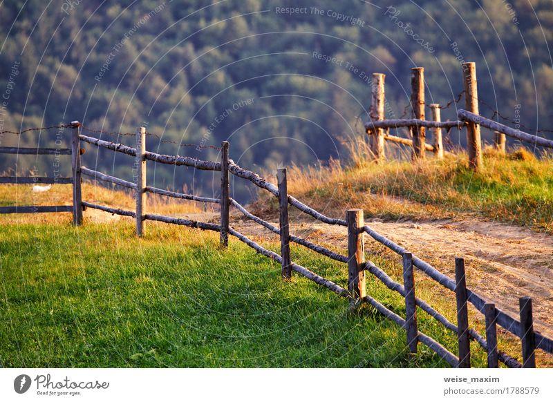 Ländliche Szene Septembers in den Karpatenbergen Natur Farbe Sommer grün schön Baum Landschaft Wald Berge u. Gebirge Umwelt Straße Wiese Herbst natürlich Gras