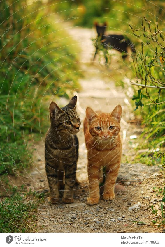Zwei Katzen Farbfoto Nahaufnahme Menschenleer Morgen Unschärfe Blick Blick in die Kamera schön Haut Ferne Sommer Sonne Leben Tier Garten Park Felsen Straße
