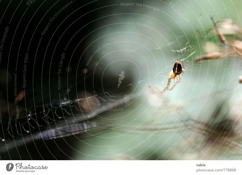 warten Natur Tier Erholung Gefühle Freiheit Zufriedenheit Angst Umwelt ästhetisch bedrohlich beobachten fangen hängen bauen Spinne