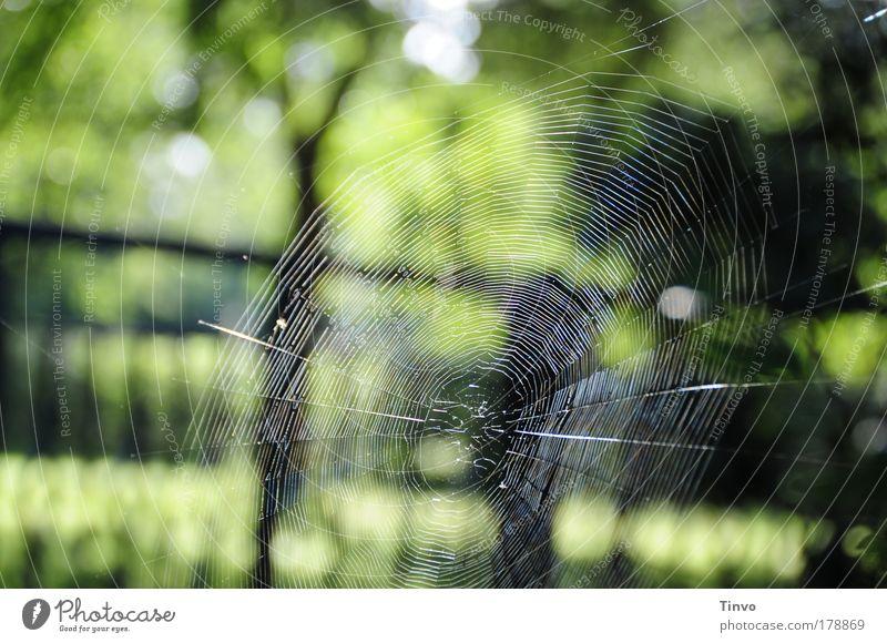 perfect Natur schön grün schwarz Garten Landschaft Kunst warten ästhetisch Netzwerk Netz zart fangen Stoff Jahreszeiten bauen