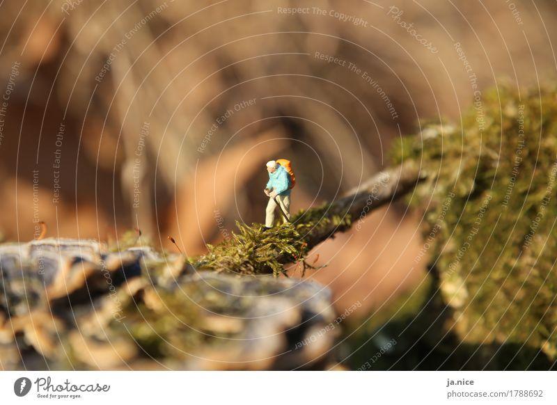 Irgendwo dazwischen Ausflug wandern Mensch maskulin Mann Erwachsene 1 Natur Landschaft Herbst Moos Erholung Sport alt Gesundheit sportlich Zufriedenheit