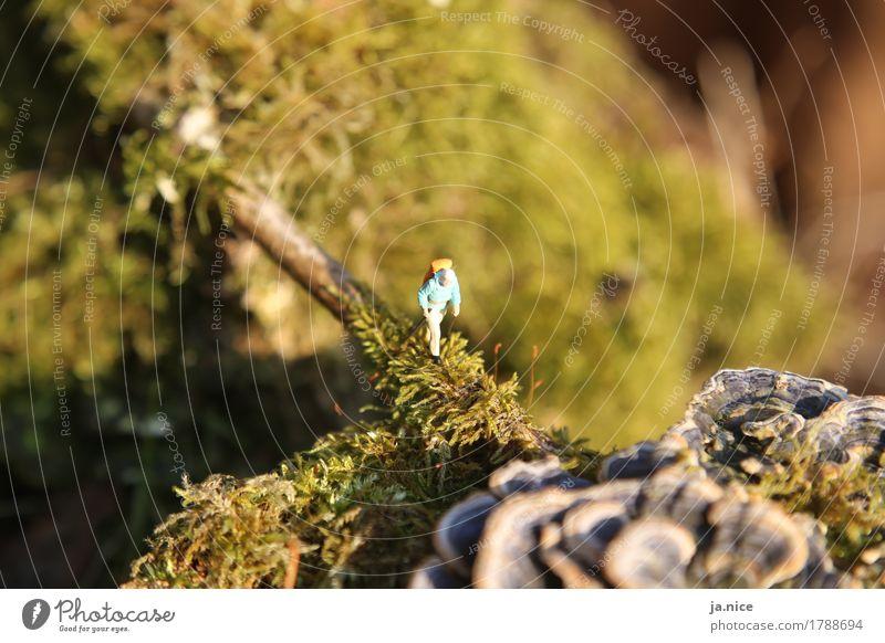 Wohin du gehst... wandern maskulin Mann Erwachsene Senior 1 Mensch Natur Herbst Moos Pilz Brücke Bewegung grün Zufriedenheit ruhig Einsamkeit Abenteuer
