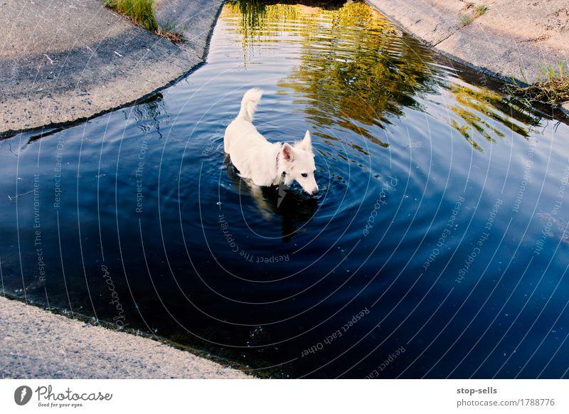 Affenhitze, Hund Natur Ferien & Urlaub & Reisen Stadt Sommer Tier Wärme Gesundheit Spielen Garten Schwimmen & Baden Park Zufriedenheit Beton