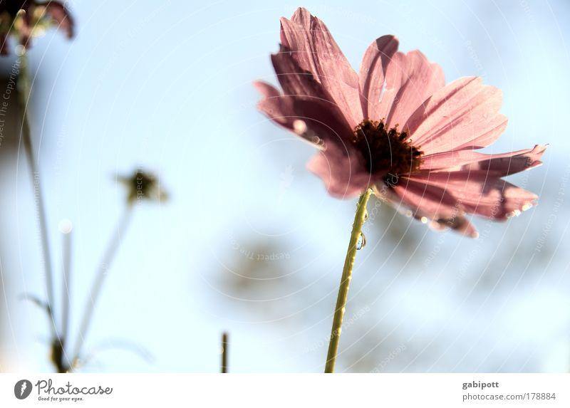 Pastell Natur blau schön Pflanze Sommer Blume ruhig Umwelt Landschaft Frühling Blüte Traurigkeit rosa natürlich Idylle Gelassenheit