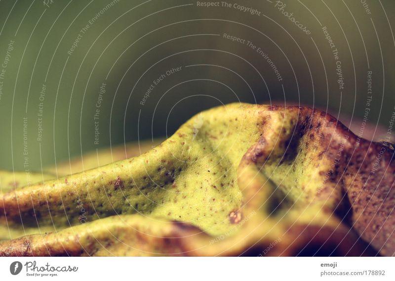 Ratespiel Farbfoto Außenaufnahme Nahaufnahme Detailaufnahme Makroaufnahme abstrakt Strukturen & Formen Menschenleer Textfreiraum oben Hintergrund neutral