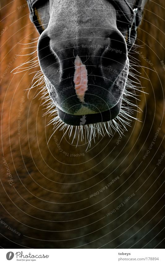 7-Tage-Bart schön Freude Tier Haare & Frisuren lustig grau Tag Wildtier wild Behaarung authentisch verrückt Vergänglichkeit Pferd Bart skurril