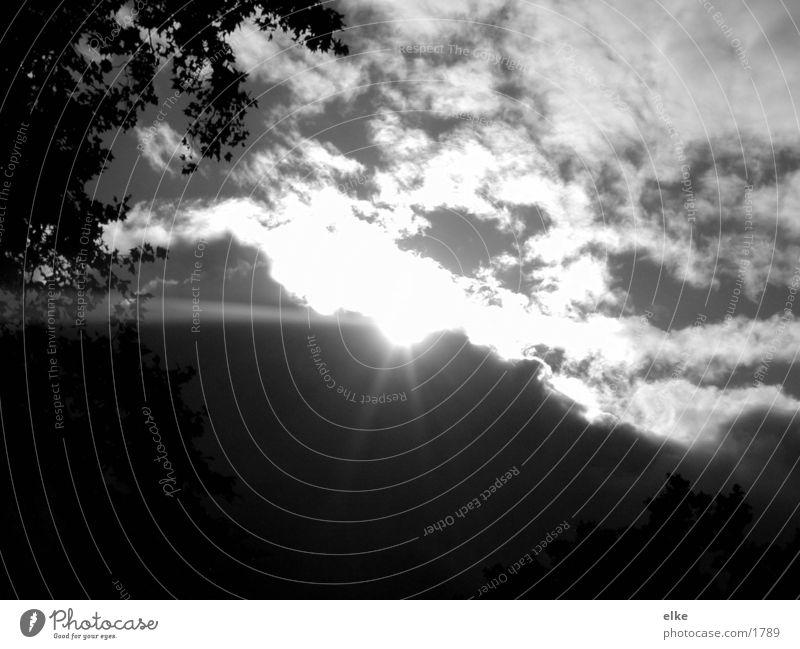herbstsonne Herbst Baum Wiese Wolken Sonne Schwarzweißfoto