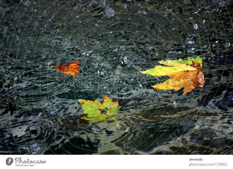 Verflossen Farbfoto mehrfarbig Außenaufnahme Menschenleer Textfreiraum oben Textfreiraum unten Natur Wasser Wassertropfen Herbst Blatt Sorge Trauer Enttäuschung