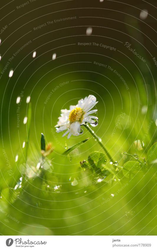 Sonne und Regen Natur Wasser schön Blume Pflanze Sommer Wiese Blüte Gras Zufriedenheit Umwelt Wassertropfen frisch Hoffnung