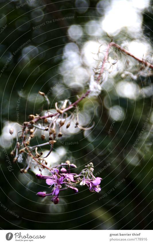 violett Pflanze Sommer Blume Erholung Umwelt violett berühren Kreativität Inspiration