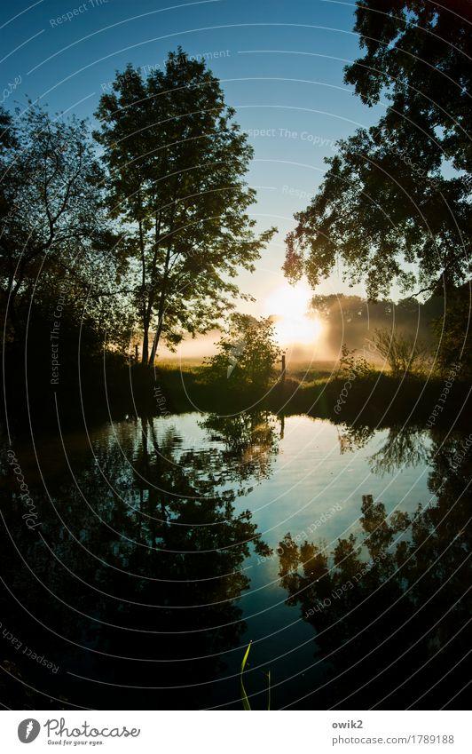 Te Deum Natur Pflanze Wasser Baum Landschaft ruhig Ferne Umwelt Herbst außergewöhnlich leuchten glänzend Luft Nebel Idylle Sträucher