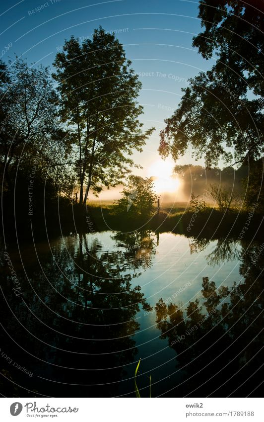Te Deum Umwelt Natur Landschaft Pflanze Urelemente Luft Wasser Wolkenloser Himmel Herbst Schönes Wetter Nebel Baum Sträucher Flussufer Bach leuchten