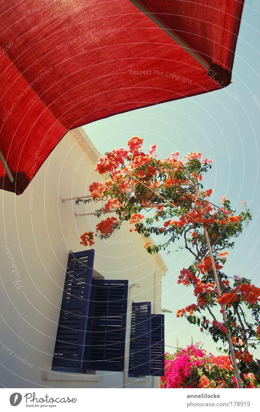 Siesta Pflanze Sommer Ferien & Urlaub & Reisen ruhig Haus Erholung Wand Fenster Blüte Garten Mauer Fassade Lifestyle Tourismus Dorf