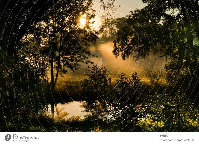 Morgengebet Natur Pflanze Wasser Baum Landschaft ruhig Umwelt Traurigkeit Herbst Gras außergewöhnlich leuchten Luft Nebel Idylle Sträucher