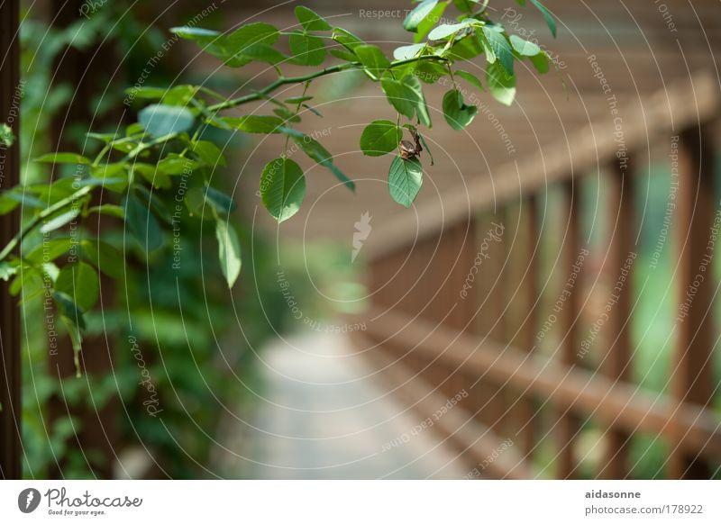 Green Brücke Wege & Pfade Ranke Rose Kletterrose Sommer Garten Park Korea Asien Holz Gestell