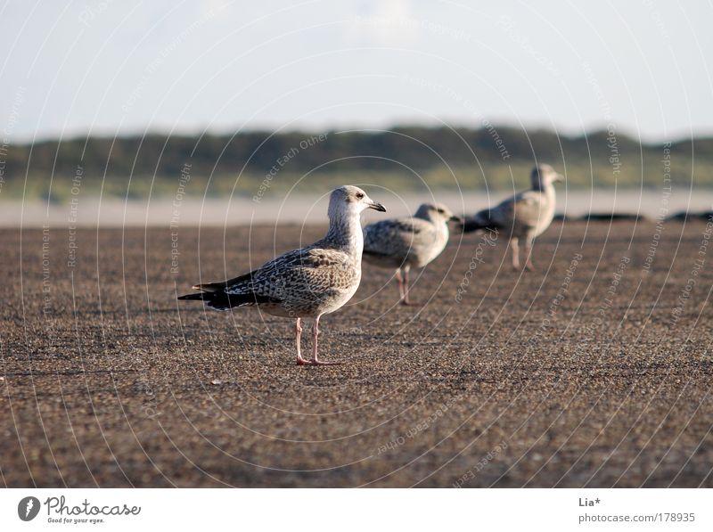 zu dritt ruhig Tier Freundschaft Vogel sitzen Tiergruppe Aussicht Team Flügel Gelassenheit Langeweile Möwe Sitzreihe hocken 3