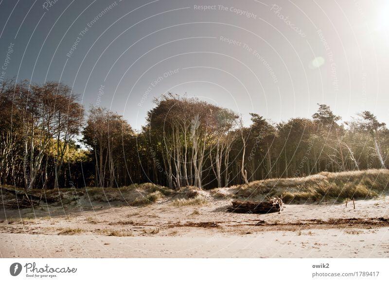 Holz und Sand Umwelt Natur Landschaft Pflanze Luft Wolkenloser Himmel Herbst Klima Schönes Wetter Wärme Baum Sträucher Strand Ostsee Sandstrand Weststrand