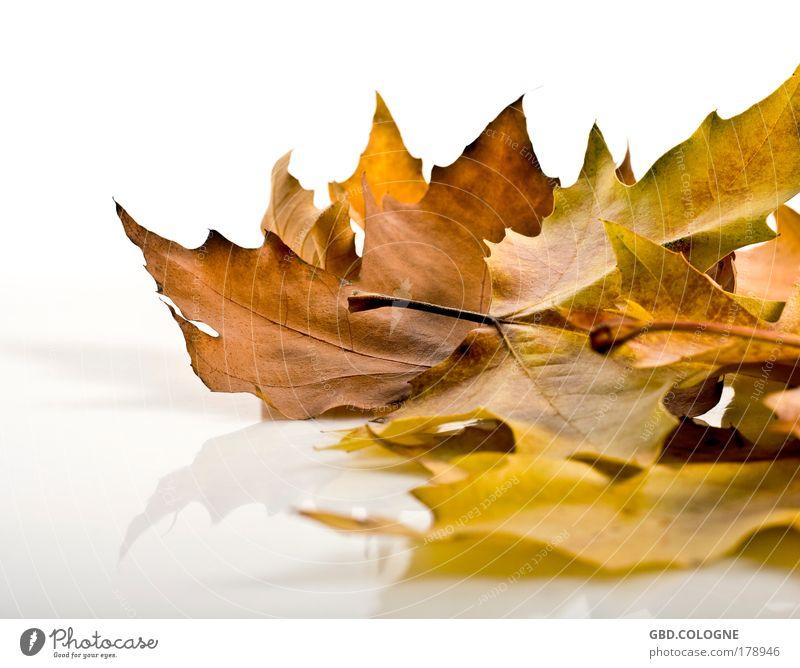 konservierter Sommer I Natur alt Pflanze Blatt gelb Gefühle Herbst natürlich braun gold Vergänglichkeit Warmherzigkeit Wandel & Veränderung trocken Verzweiflung