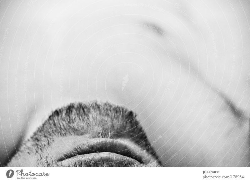 gesicht vs. textfreiraum Schwarzweißfoto Detailaufnahme Textfreiraum oben Kontrast Schwache Tiefenschärfe Körper Haut Mensch maskulin Mann Erwachsene Mund