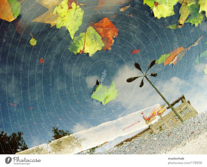 hereinspaziert herr herbst mehrfarbig abstrakt Muster Strukturen & Formen Reflexion & Spiegelung Ferne Umwelt Landschaft Wasser Wassertropfen Herbst Klima