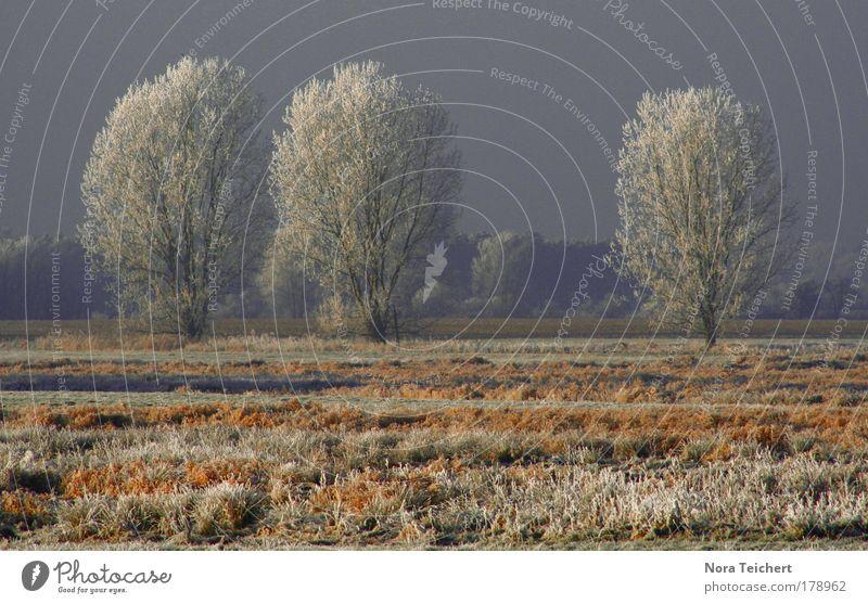 50 Gedeckte Farben Außenaufnahme Menschenleer Tag Kontrast Zentralperspektive Totale Umwelt Natur Landschaft Pflanze Tier Winter Eis Frost Schnee Baum Gras