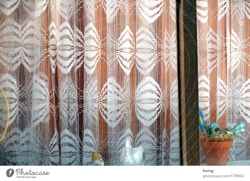 Nils Holgersson und Martin essen in Vombsjön ein Schnitzel Fenster Wohnung Lifestyle Dekoration & Verzierung Show Häusliches Leben Vorhang Gardine Schwan
