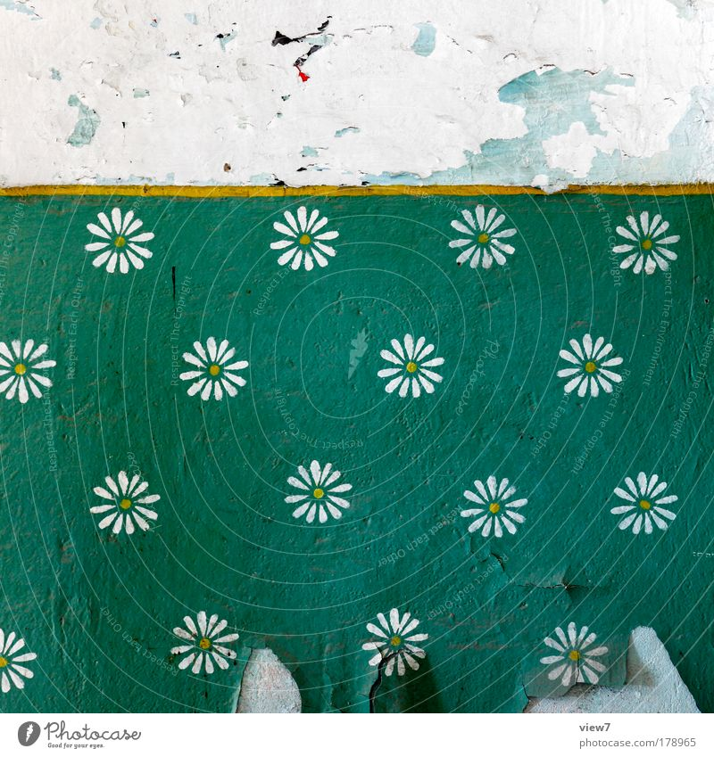 Blumenwiese alt grün gelb Stein Raum dreckig Wohnung Ordnung ästhetisch kaputt Wandel & Veränderung Kitsch Vergänglichkeit Streifen einzigartig