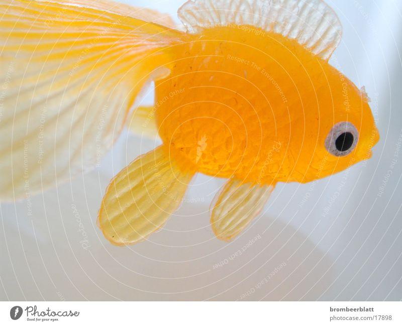 Gummifisch orange Fisch Spielzeug