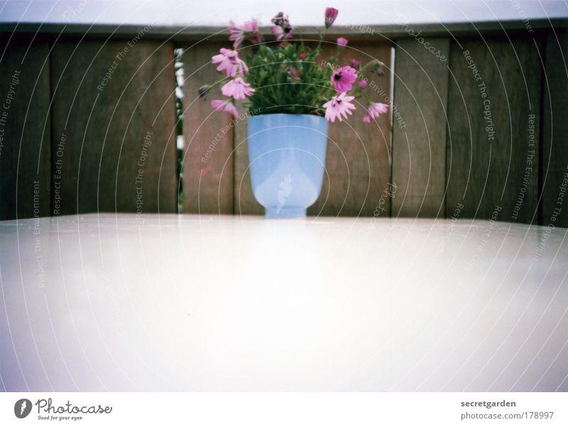 [KI09.01] kieler blumensteckkunst schön weiß Blume blau Sommer Ferien & Urlaub & Reisen Haus Erholung Wand Blüte Garten Holz Mauer braun Wohnung rosa