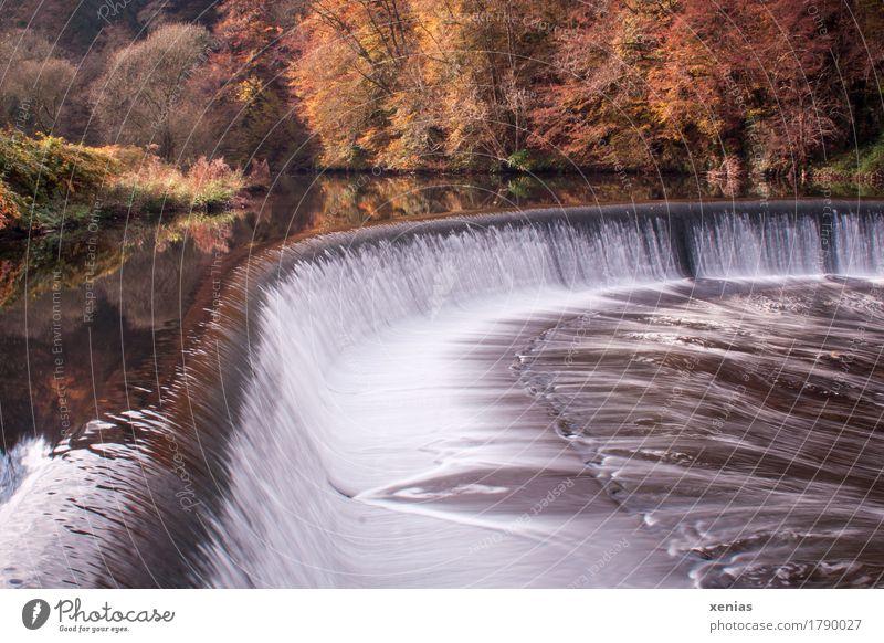 Künstlicher Wasserfall des Flusses Wupper bei Unterburg Solingen Landschaft Herbst Bergisches Land Fisch Erholung wandern braun gelb weiß Leben Wupperwehr Tag