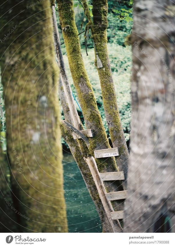 Schritte zum River Rope Swing Abenteuer Freiheit Sommer Sommerurlaub Natur Holz Ferien & Urlaub & Reisen schaukeln Schwimmen & Baden braun grün friedlich