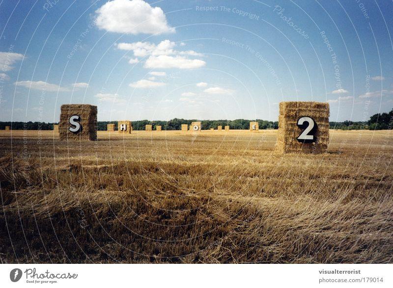 SHOE2 Natur Feld Kunst Kommunizieren Skulptur Kunstwerk Stoppelfeld