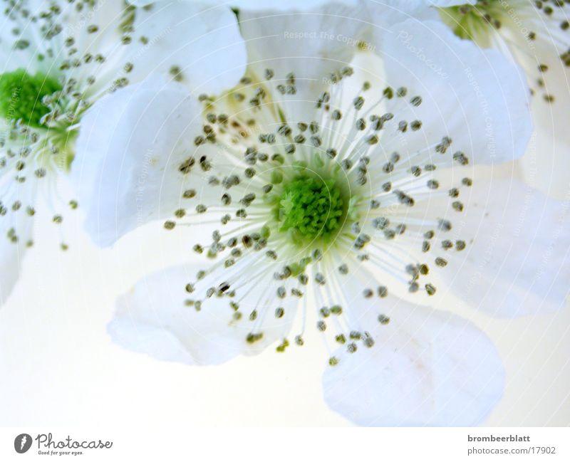 Frühling!! Blume Blüte