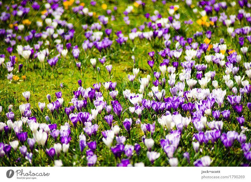 Glöckchen eine Wiese Pflanze Frühling Blume ästhetisch authentisch frisch schön unten Wärme Fröhlichkeit Frühlingsgefühle Inspiration abstrakt Sonnenlicht