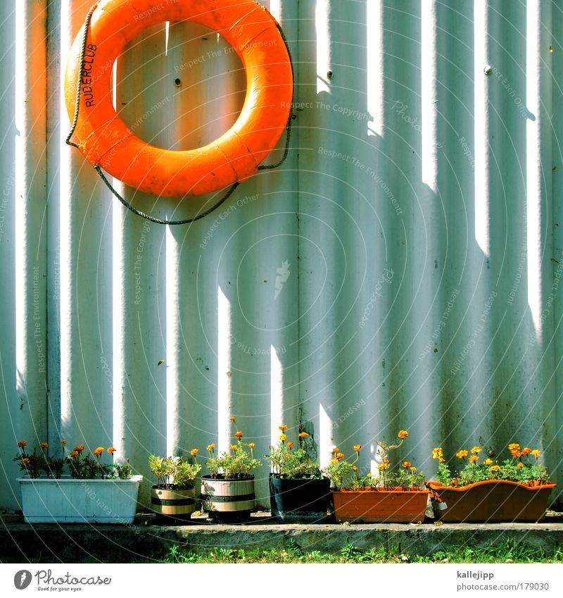 einer kajak Pflanze Spielen Freizeit & Hobby Sicherheit Lifestyle Hilfsbereitschaft Schutz Vertrauen Club Grünpflanze notleidend Rettungsring ertrinken Topfpflanze Sportstätten