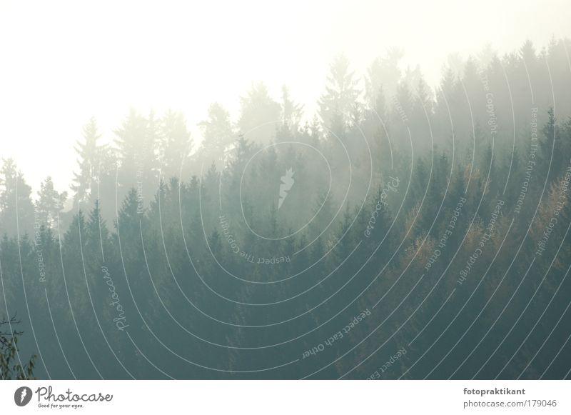 Baumkronen Farbfoto Außenaufnahme Menschenleer Morgen Morgendämmerung Blick nach vorn Natur Herbst Nebel Wald dunkel Tag