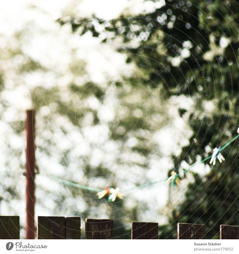 übern Zaun geschaut Baum Pflanze Tier Wiese Garten Park Luft Frieden Bauernhof Wäscheleine Mecklenburg-Vorpommern Wäscheklammern Metallstange