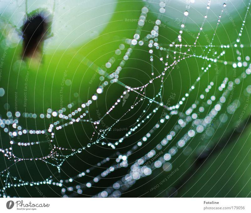 Schönheit Natur Natur Wasser grün Tier Umwelt Park Regen Wetter Wildtier nass ästhetisch Wassertropfen Tau Spinne Spinnennetz