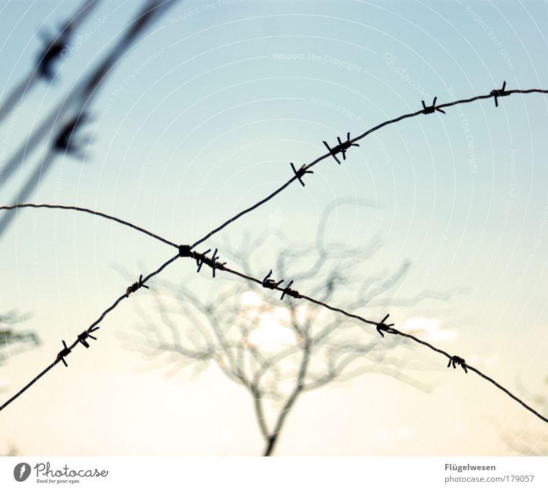 14 Tage lebenslänglich Baum Einsamkeit Ferne Freiheit frei Lifestyle gefährlich bedrohlich Freizeit & Hobby Unendlichkeit Verzweiflung gefangen Justizvollzugsanstalt Zukunftsangst Stacheldraht Stacheldrahtzaun