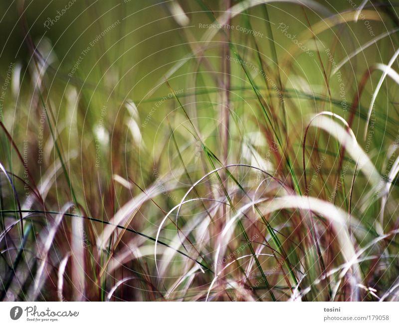 Durcheinander Farbfoto Außenaufnahme Makroaufnahme Textfreiraum oben Kontrast Unschärfe Schwache Tiefenschärfe Umwelt Natur Pflanze Gras Farn Grünpflanze