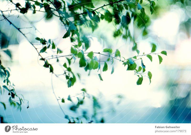 scrub Umwelt Natur Sonnenlicht Sommer Schönes Wetter Wärme Pflanze Sträucher Grünpflanze Wildpflanze Park ästhetisch hell natürlich positiv blau grün Unschärfe