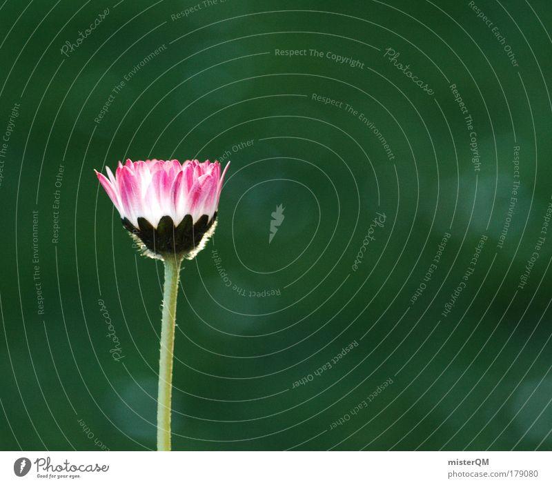 Stand-Alone. Natur schön Blume grün Pflanze Sommer ruhig Einsamkeit Wiese Blüte Kraft klein Umwelt ästhetisch Wachstum Stengel