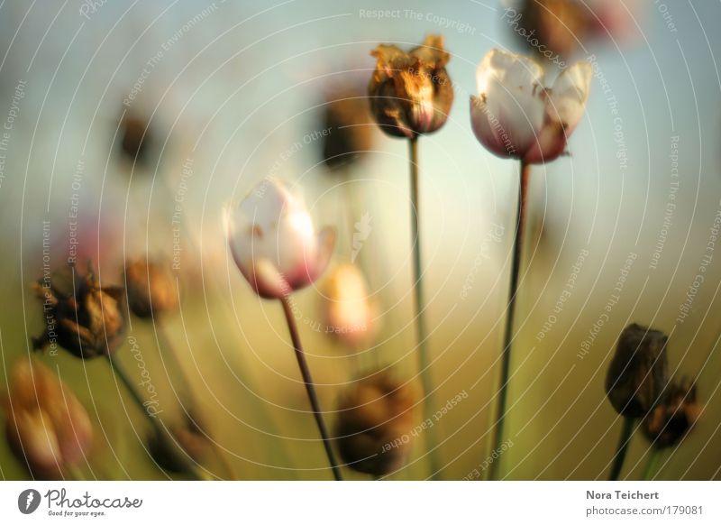 Alt und neu. Natur alt Pflanze schön Sommer Landschaft Tier Umwelt Blüte Herbst Wiese Zeit Stimmung Horizont träumen Feld