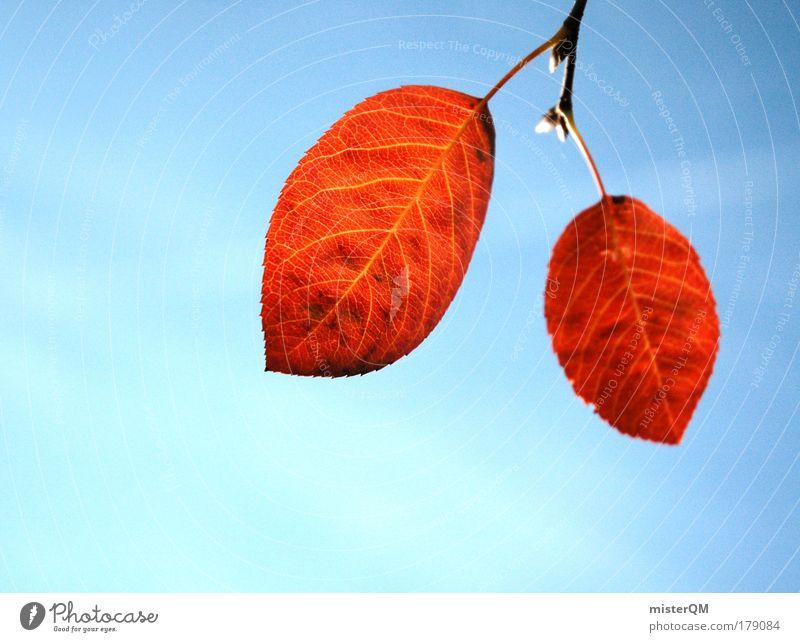 Herbstbote. Natur Baum blau rot Blatt Leben kalt Herbst Tod 2 Zusammensein Wetter Zeit ästhetisch Vergänglichkeit