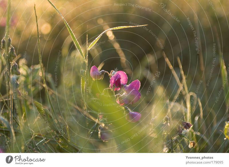 Ein Morgen im Herbst Natur Blume Pflanze Sommer ruhig Tier Wiese Blüte Gras Frühling Park Landschaft Feld Umwelt Wassertropfen